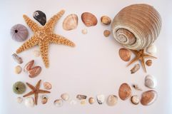 Sea shells on gray background royalty free stock photography