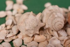 Sea shells on a green background stock images