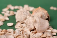 Sea shells on a green background royalty free stock image