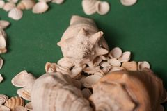 Sea shells on a green background stock photography
