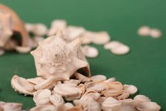 Sea shells on a green background royalty free stock photos