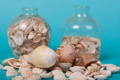 Sea shells on a green background Royalty Free Stock Photography