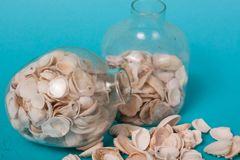 Sea shells on a green background Royalty Free Stock Photo