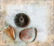 Sea Shells on a Grunge Background Stock Photo