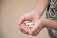 Sea shells. Handful of various shape sea shells Stock Photos