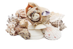 Sea shells . Sea shells and handicrafts made of them Stock Photos