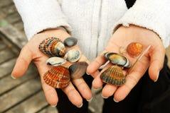 Sea Shells in hands stock image
