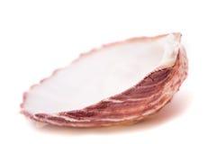 Sea shells isolated. On white background royalty free stock photo
