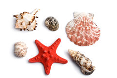 Sea shells isolated Royalty Free Stock Photos
