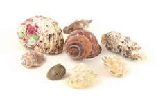 Sea shells isolated on white Stock Image