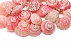 Sea shells. Sea shells isolated on white background Stock Photography