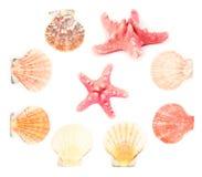 Sea shells Stock Image