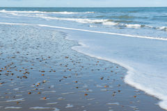 Sea with shells Royalty Free Stock Photo
