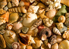Sea Shells Layout. Collection of sea shells on sand, consisting of a variety of shells and starfish stock images