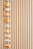 Sea shells  lie on the sand Royalty Free Stock Photo