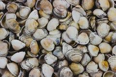 Sea shells of light shade. Background of numerous sea shells. stock photography