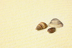 Sea shells lying on beach Royalty Free Stock Image