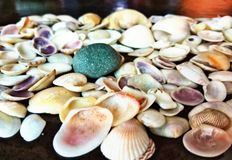 Sea shells. Many sea shells of different shape and size Royalty Free Stock Photos