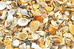 Sea Shells. Of many types and sizes on the beach Stock Photos