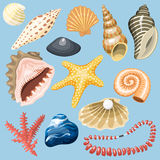 Sea shells marine cartoon clam-shell and ocean starfish coralline vector illustration. Royalty Free Stock Photo
