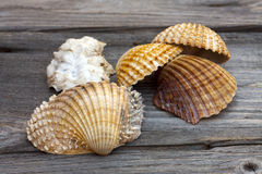 Sea shells from the Mediterranean Sea Stock Photos