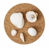 Sea shells mix on the circular cork base Stock Images