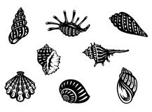 Sea shells and mollusks Stock Images