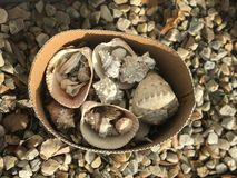 Sea Shells At My Doorstep Royalty Free Stock Photo