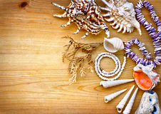 Sea shells with necklace  as background Royalty Free Stock Images