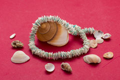 Sea shells necklace Stock Photos
