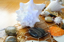 Sea shells and net Stock Photos