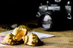 Sea shells and old fotocamera on brown wooden table Royalty Free Stock Photo