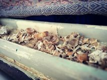 Sea shells in an old wooden boat stock photography