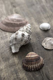 Sea shells on old wooden plank Royalty Free Stock Photos