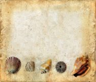 Sea Shells On Bottom Of A Grunge Background Royalty Free Stock Photo