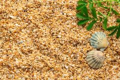 Sea Shells On Sand. Summer Beach Background. Top View Stock Images