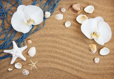Sea shells with sand and orchid flowers. Sea shells with  orchid flowers on a sand  background Stock Photos