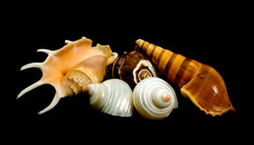Sea Shells Over Black Background. Collection of sea shells over black background Stock Photos