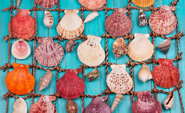 Sea Shells Over Blue Background. Sea Shells Over Blue Wooden Background Stock Photography