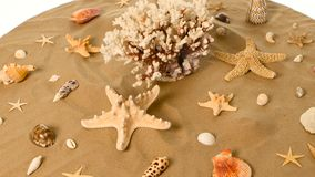 Sea shells over a sand, white, rotation stock video footage
