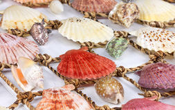 Sea Shells over white background. Sea Shells over white wooden background Royalty Free Stock Photos