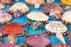 Sea Shells Over Wooden Background. Sea Shells Over Blue Wooden Background Royalty Free Stock Photography