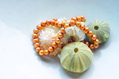 Sea shells and pearls. Sea shells collection with sea urchins and old broken shell arranged with fresh water pearls Stock Photos