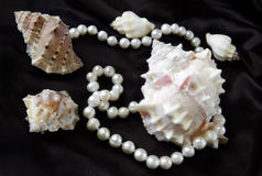Sea shells and pearls on a black silk Stock Photos