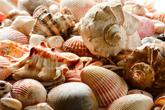 Sea shells and pebble beach Royalty Free Stock Image