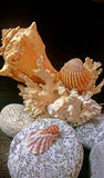 Sea shells and pebblea. I brought personally these corals,seashells and stones from Rivers and sea Royalty Free Stock Photography