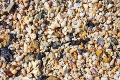 Sea shells and pebbles on the beach. Sea shells and pebbles background, vacation texture. A beach in Crete, made up of pebbles and small shells stock image
