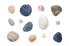 Sea shells and pebbles. Isolated on a white background Royalty Free Stock Image