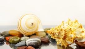 Sea shells and pebbles Stock Image