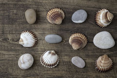 Sea shells and  pebbles on an old wooden plank Stock Photography